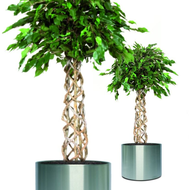 kunstpflanze ficus exotica ball im florando versand shop. Black Bedroom Furniture Sets. Home Design Ideas