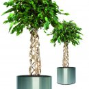 Kunstpflanze Ficus Exotica Ball, Höhe 150 cm mit 990...